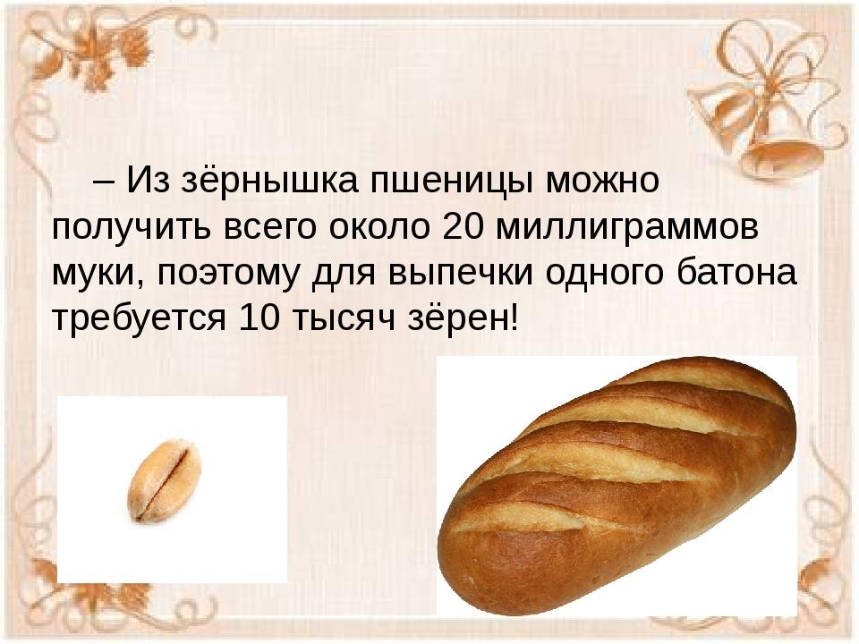 – Из зёрнышка пшеницы можно получить всего около 20 миллиграммов муки, поэто...