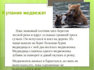 Купание медвежат Наш знакомый охотник шёл берегом лесной реки и вдруг услышал