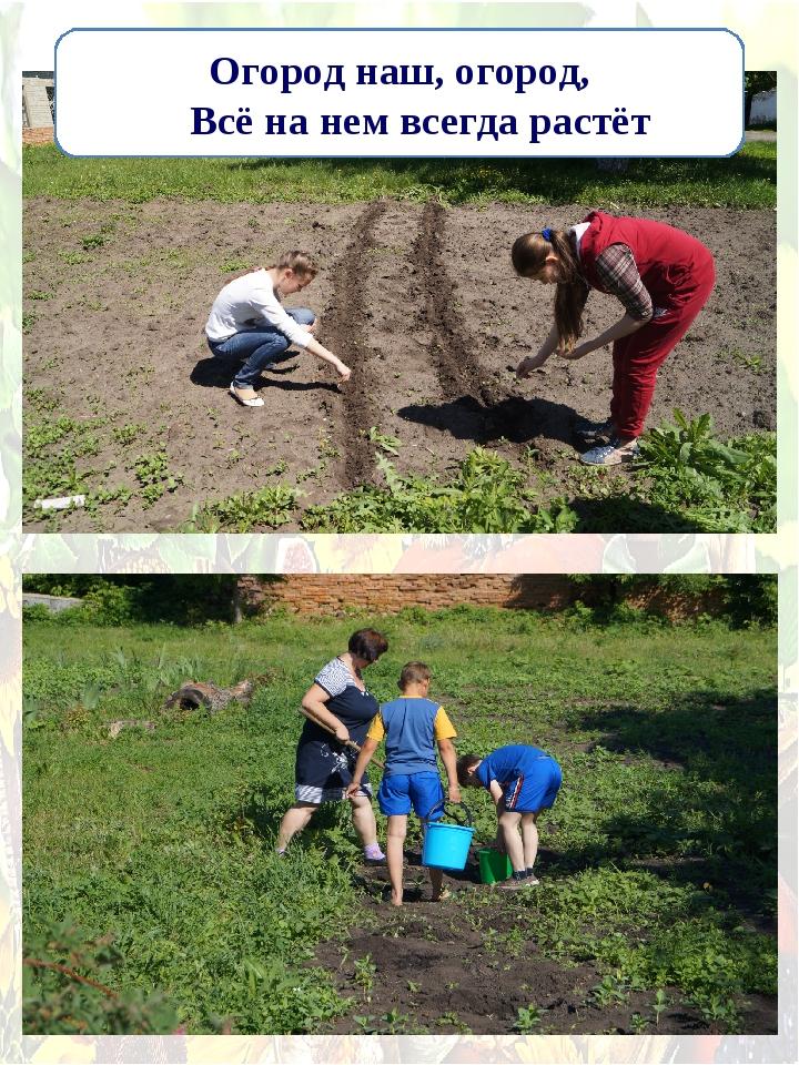 Огород наш, огород, Всё на нем всегда растёт