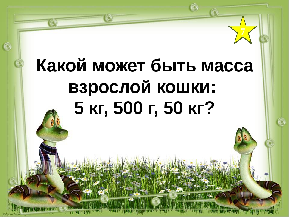 7 Какой может быть масса взрослой кошки: 5 кг, 500 г, 50 кг?