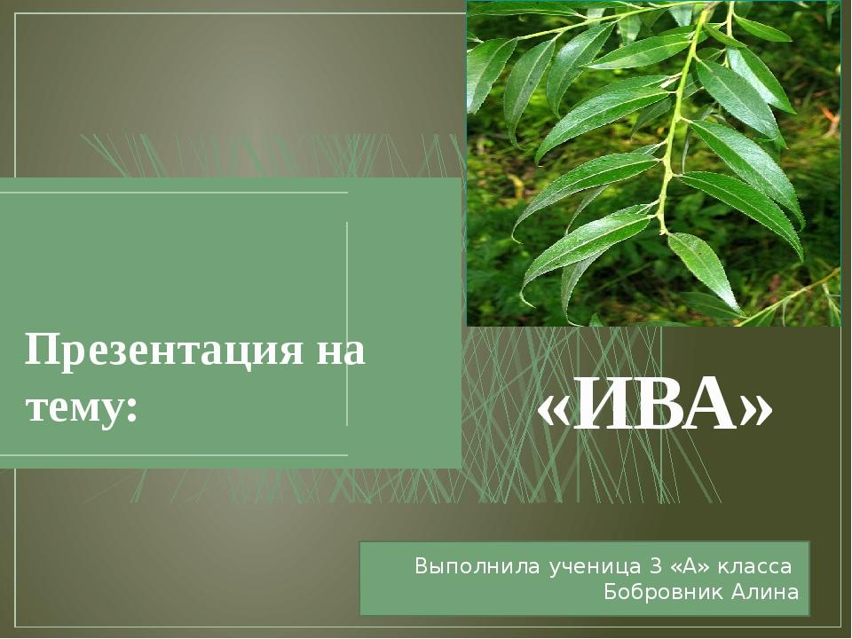 «ИВА» Презентация на тему: Выполнила ученица 3 «А» класса Бобровник Алина