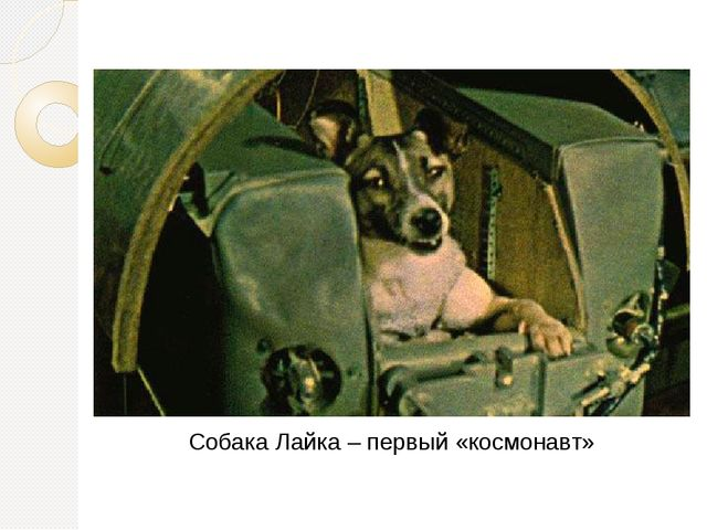Собака Лайка – первый «космонавт»