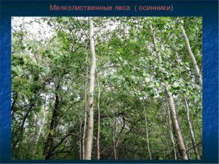 Мелколиственные леса ( осинники)