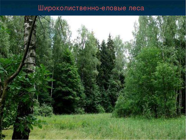 Широколиственно-еловые леса