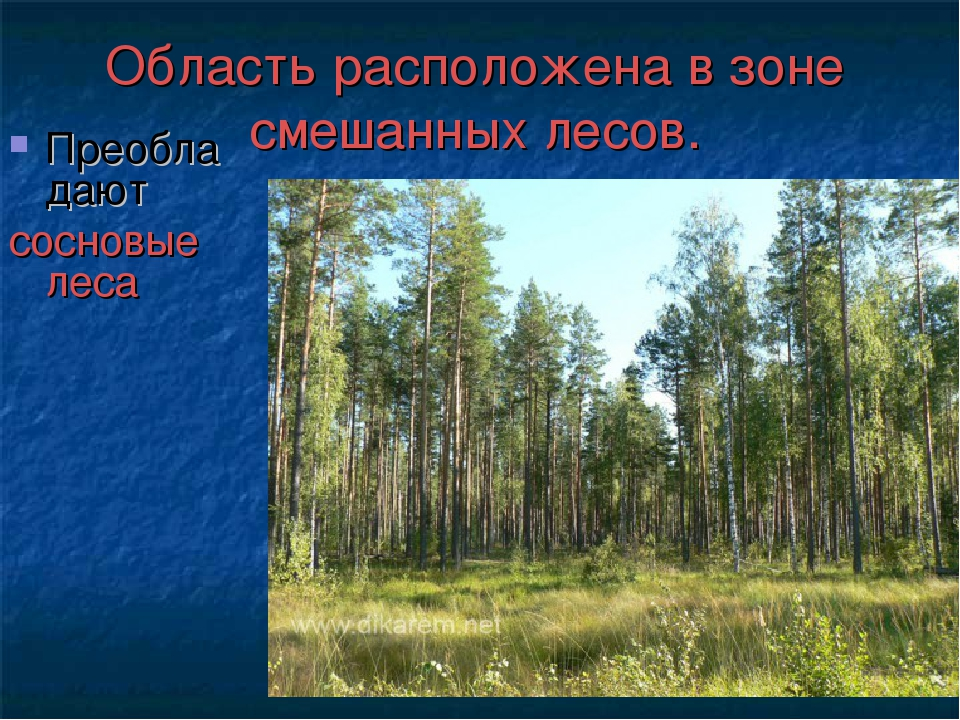 Область расположена в зоне смешанных лесов. Преобладают сосновые леса