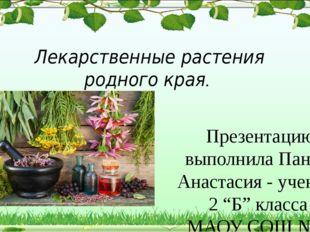 Лекарственные растения родного края. Презентацию выполнила Пантус Анастасия