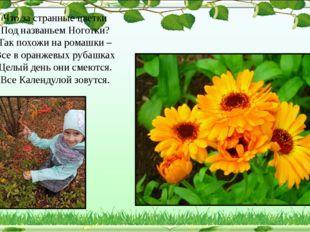 Что за странные цветки Под названьем Ноготки? Так похожи на ромашки – Все в о