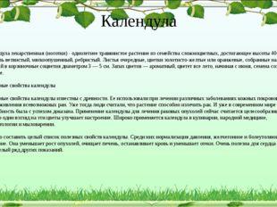 Календула Календула лекарственная (ноготки) - однолетнее травянистое растение