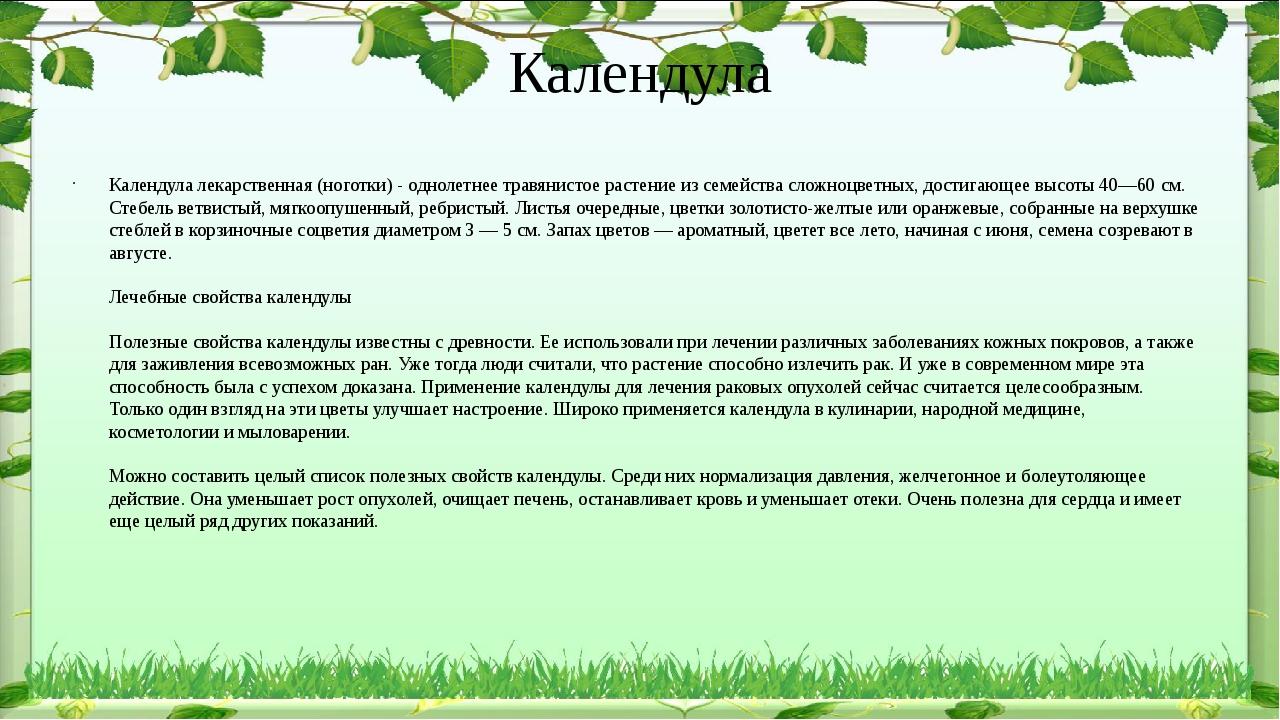Календула Календула лекарственная (ноготки) - однолетнее травянистое растение...