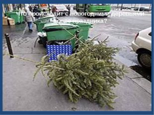 Что происходит с новогодними деревьями после праздника?