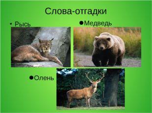 Слова-отгадки Рысь Олень Медведь
