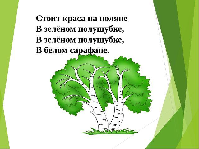 Стоит краса на поляне В зелёном полушубке, В зелёном полушубке, В белом сараф...