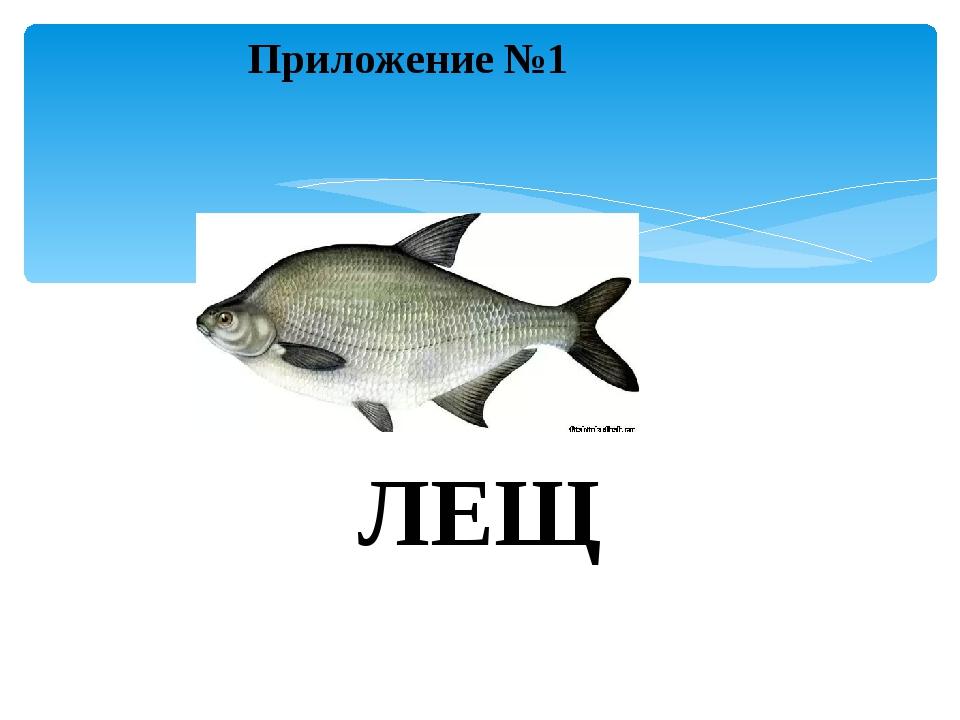 Приложение №1 ЛЕЩ