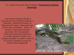 21. Самая большая змея в мире? Гигантская зеленая анаконда Гигантская анакон