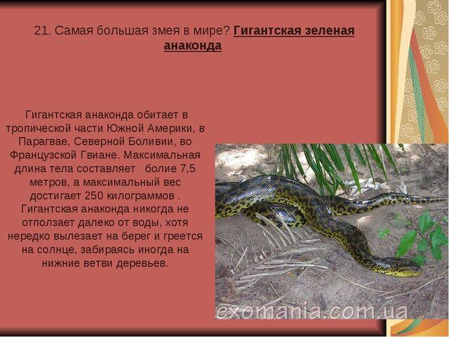 21. Самая большая змея в мире? Гигантская зеленая анаконда Гигантская анакон...