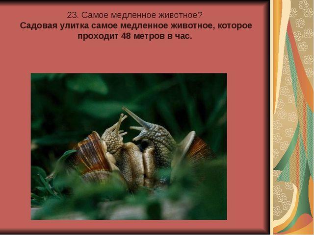 23. Самое медленное животное? Садовая улитка самое медленное животное, котор...