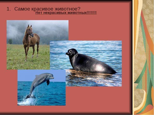 Самое красивое животное? Нет некрасивых животных!!!!!!!!