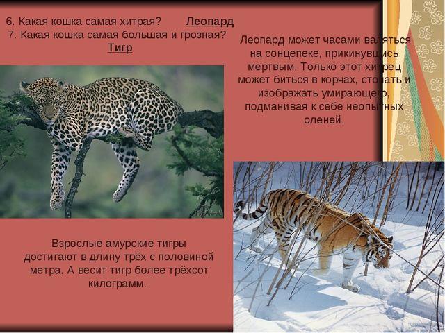 6. Какая кошка самая хитрая? Леопард 7. Какая кошка самая большая и грозная?...