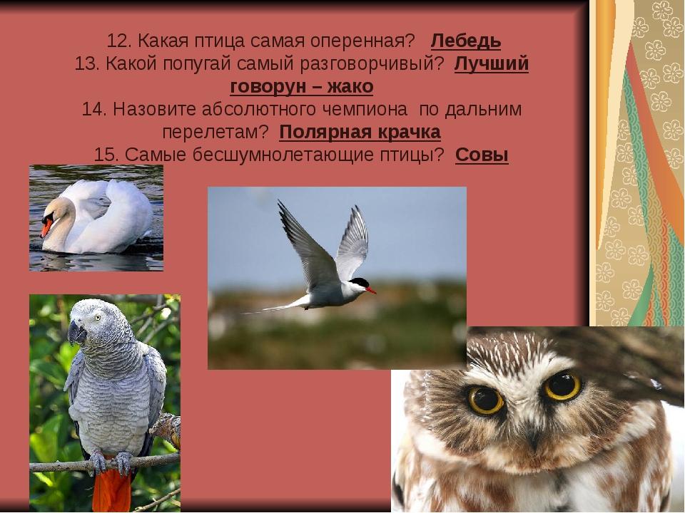 12. Какая птица самая оперенная? Лебедь 13. Какой попугай самый разговорчивы...