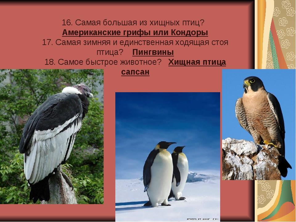 16. Самая большая из хищных птиц? Американские грифы или Кондоры 17. Самая зи...