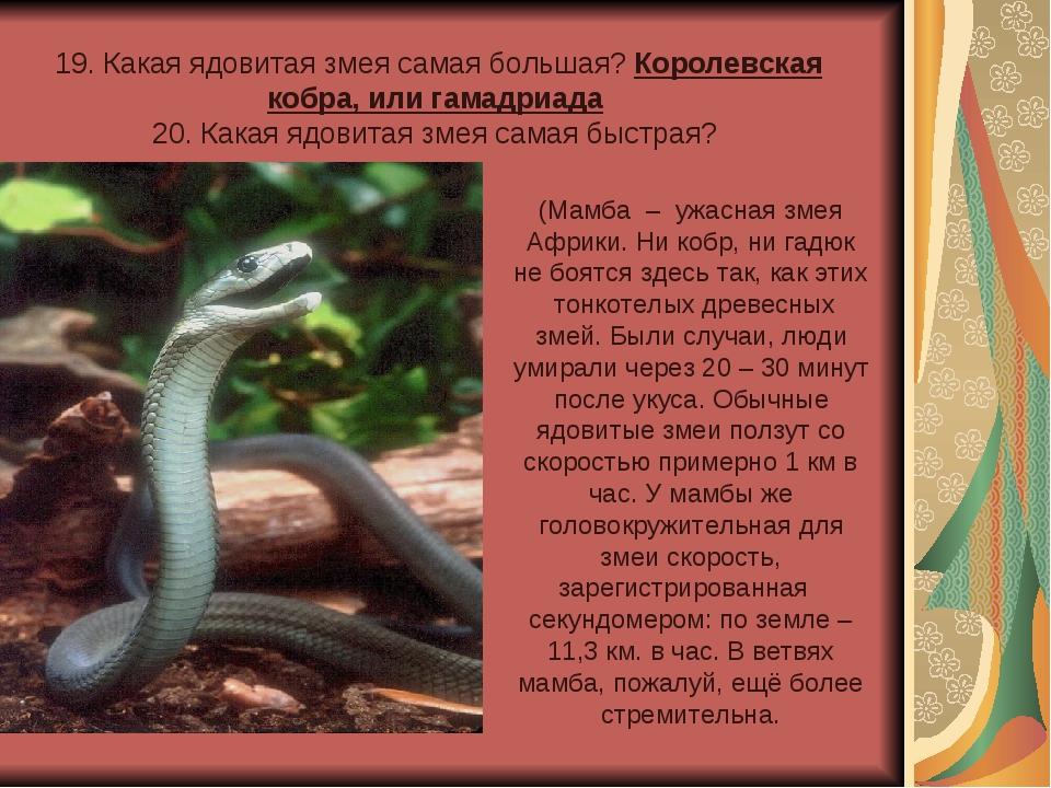 19. Какая ядовитая змея самая большая? Королевская кобра, или гамадриада 20....