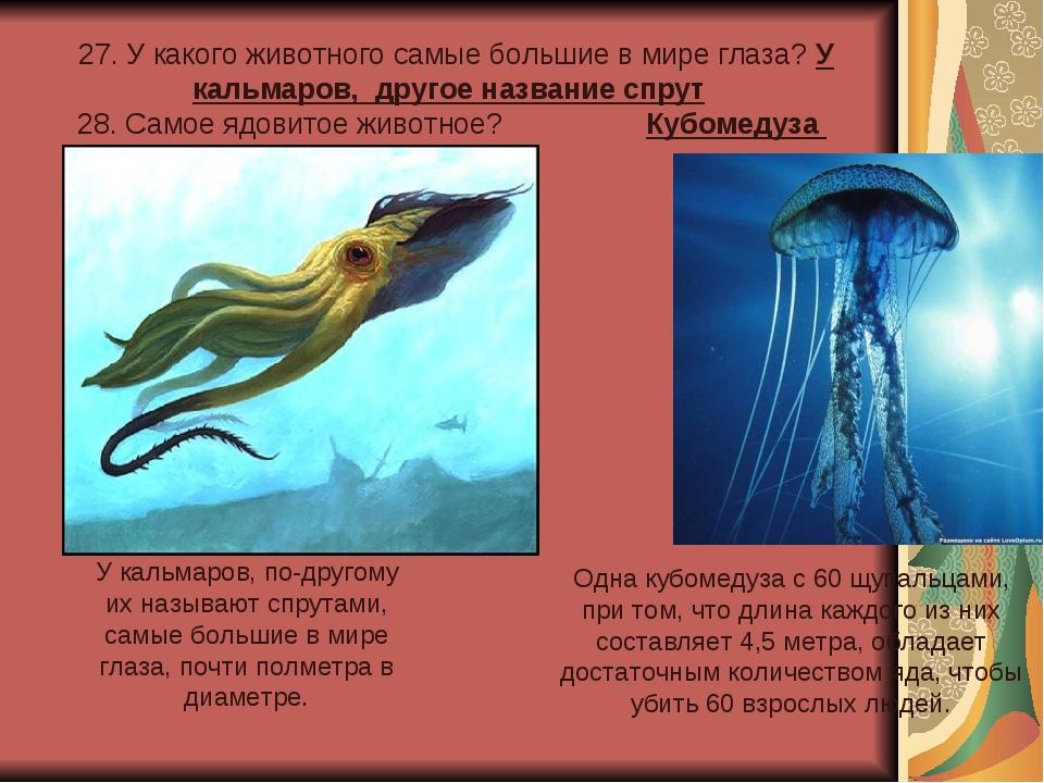 27. У какого животного самые большие в мире глаза? У кальмаров, другое назва...