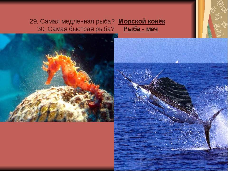 29. Самая медленная рыба? Морской конёк 30. Самая быстрая рыба? Рыба - меч