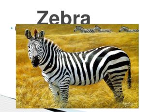 Ы Zebra