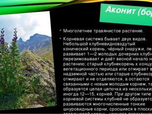 Аконит (борец) Многолетнее травянистое растение. Корневая система бывает двух