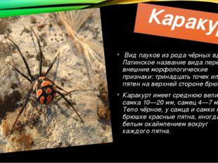 Каракурт Видпауковиз родачёрных вдов. Латинское название вида передаёт вн