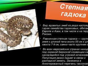 Степная гадюка Вид ядовитых змей из рода настоящих гадюк семейства гадюковых,