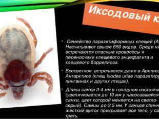 Иксодовый клещ Семейство паразитиформных клещей (Acari). Насчитывают свыше 65
