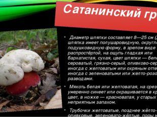 Сатанинский гриб Диаметр шляпки составляет 8—25 см (до 30 см), шляпка имеет п