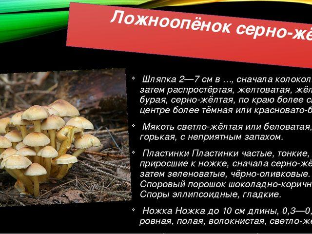 Ложноопёнок серно-жёлтый Шляпка 2—7 см в ∅, сначала колокольчатая, затем расп...