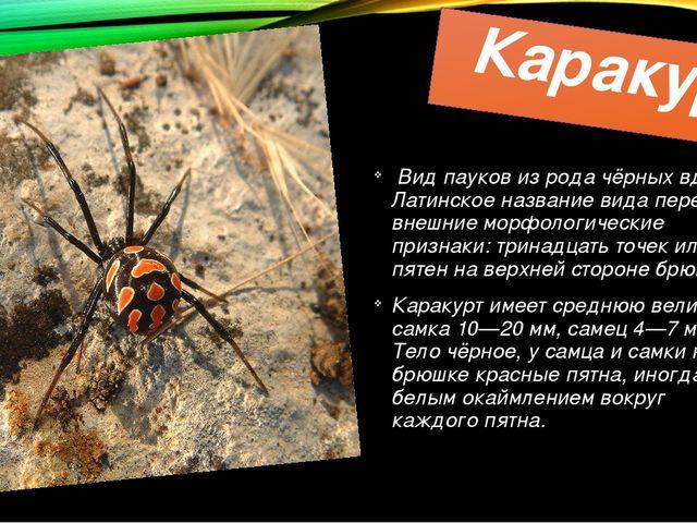 Каракурт Видпауковиз родачёрных вдов. Латинское название вида передаёт вн...