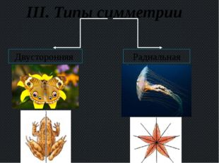 III. Типы симметрии Двусторонняя Радиальная