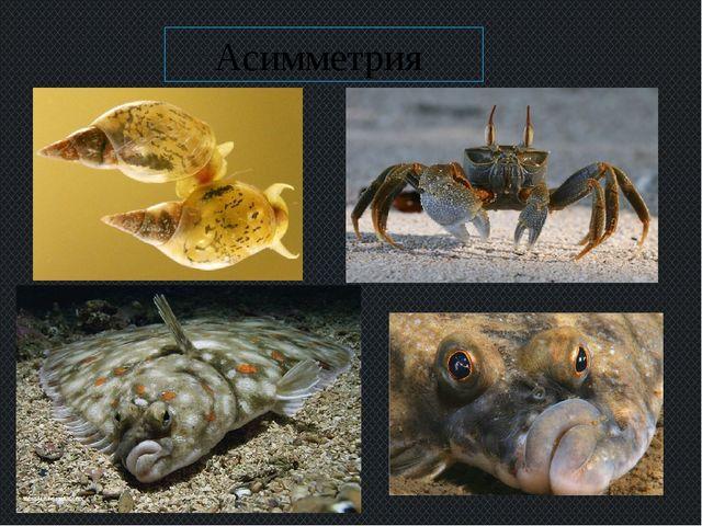 Асимметрия