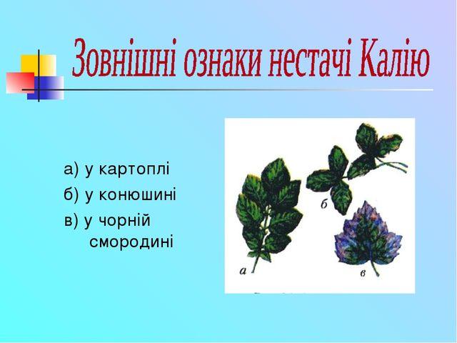 а) у картоплі б) у конюшині в) у чорній смородині