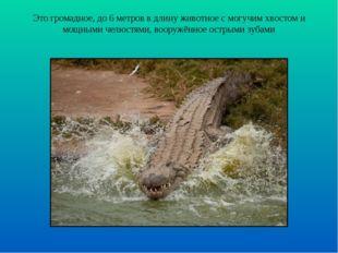 Это громадное, до 6 метров в длину животное с могучим хвостом и мощными челюс