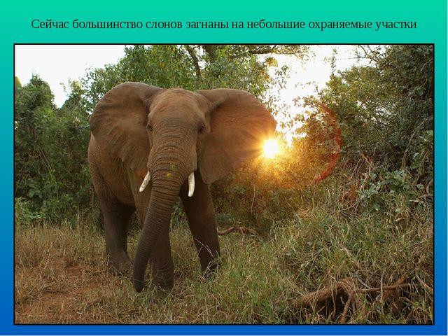 Сейчас большинство слонов загнаны на небольшие охраняемые участки