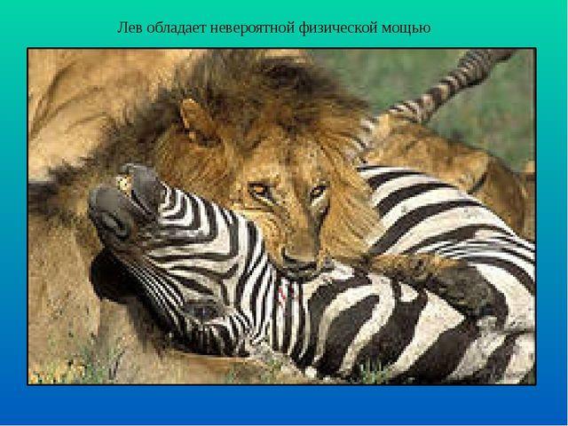 Лев обладает невероятной физической мощью