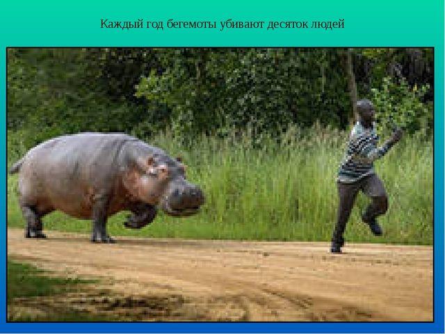 Каждый год бегемоты убивают десяток людей