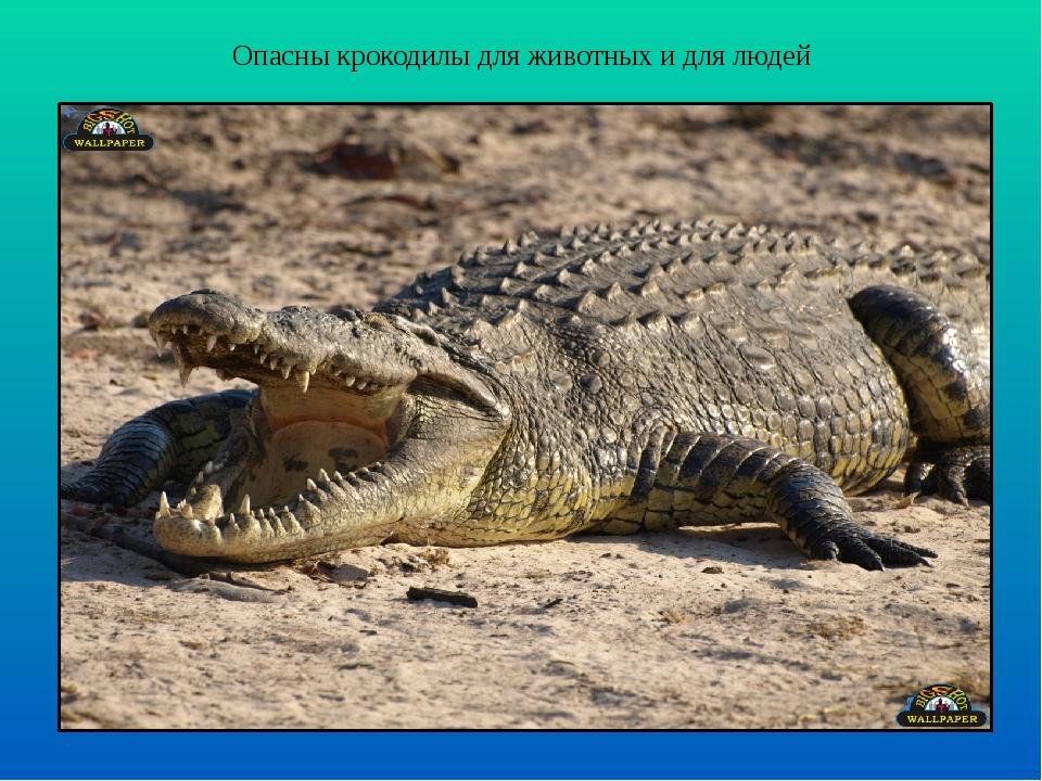 Опасны крокодилы для животных и для людей