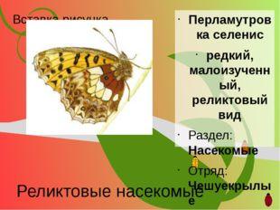 Реликтовые насекомые Перламутровка селенис редкий, малоизученный, реликтовый