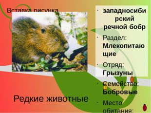 Редкие животные западносибирский речной бобр Раздел: Млекопитающие Отряд: Гры