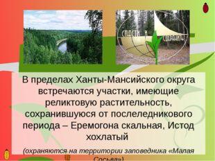В пределах Ханты-Мансийского округа встречаются участки, имеющие реликтовую р