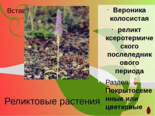 Реликтовые растения Вероника колосистая реликт ксеротермического послеледнико
