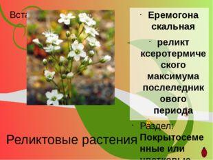 Реликтовые растения Еремогона скальная реликт ксеротермического максимума пос
