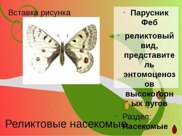 Реликтовые насекомые Парусник Феб реликтовый вид, представитель энтомоценозов...