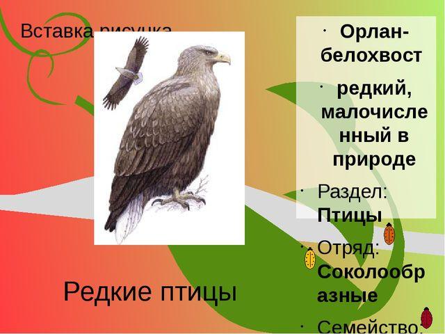 Редкие птицы Орлан- белохвост редкий, малочисленный в природе Раздел: Птицы О...